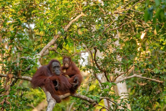 À cause du réchauffement climatique, l'Indonésie doit déplacer sa capitale... et va l'installer dans la forêt vierge de Bornéo