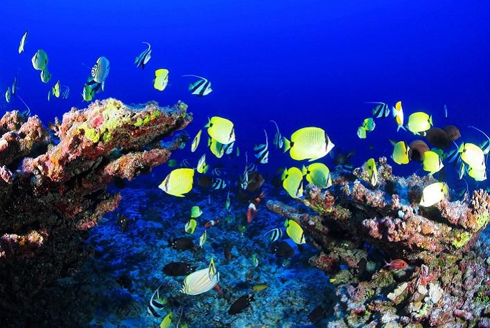 [Science] La vie marine peut être restaurée d'ici 2050 si la pression sur les écosystèmes se réduit