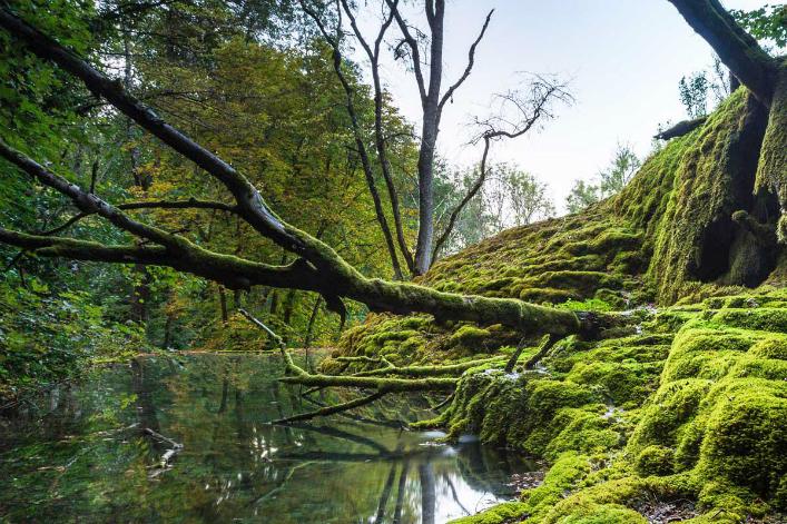 Trésor de biodiversité: le onzième parc national voit le jour en France @Novethic