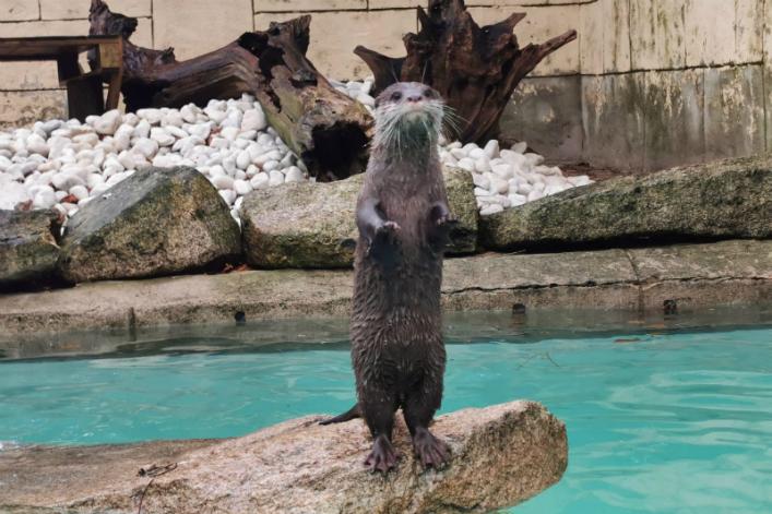 Animal Zoo bretagne Rewild