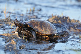Pollution maree noire ecocide tortue iStock 188020464