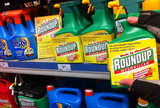 Roundup global justice now