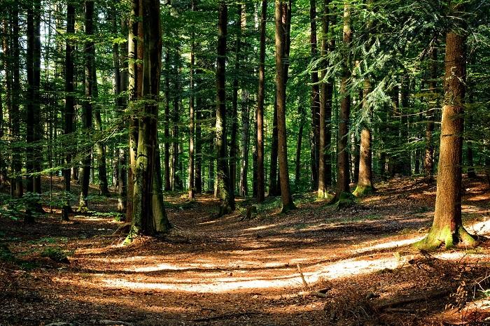 infographie la france détient la 4e forêt européenne mais elle la