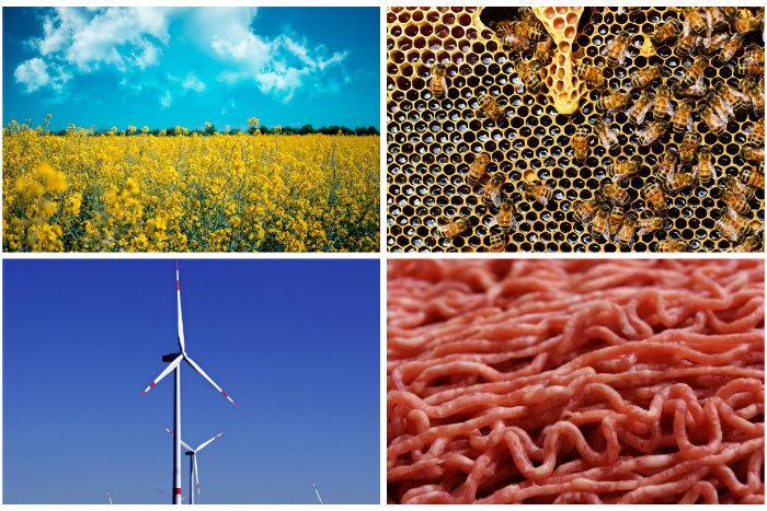 Éolienne, ruche, biocarburant… La face cachée des solutions censées sauver la planète La-face-cachee-des-solutions-censees-sauver-la-planete_01