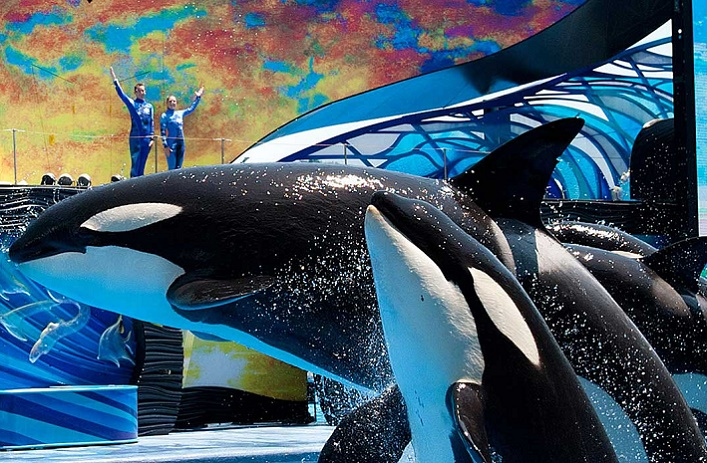 Envoyer un message privé Sea-world-parc-marin-orlando-seaworld